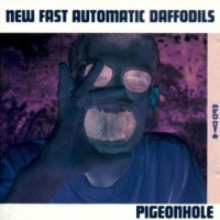 Image of New Fast Automatic Daffodils - Pigeonhole