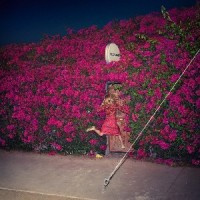 Image of Feist - Pleasure