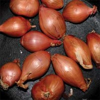 Image of Ty Segall - Fried Shallots