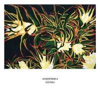 Image of Angophora - Scenes