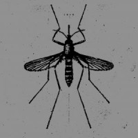 Image of Isis - Mosquito Control (Reissue)