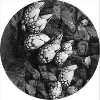 Kaspar - Epicurismo EP
