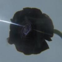 Image of Pablo's Eye - Dark Matter