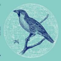 Genius Of Time - Peace Bird
