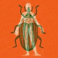 Hugh Mane - Voodoo Questions