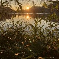 Image of Greg Foat & James Thorpe - Photosynthesis