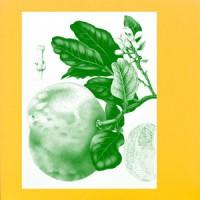 Sunny Balm - Eucalypt