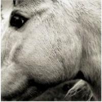 Image of Bonny Light Horseman - Bonny Light Horseman