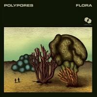 Polypores - Flora