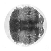 Image of Ishmael - Wolf EP 26