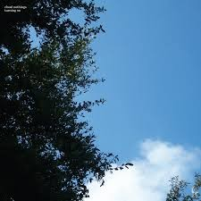 Image of Cloud Nothings - Turning On (10th Anniversary Edition)