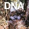 DNA<br>A Taste Of DNA<br>Superior Viaduct
