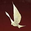 Image of Floor - Dove