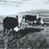 Image of Mark Kozelek - The Finally LP